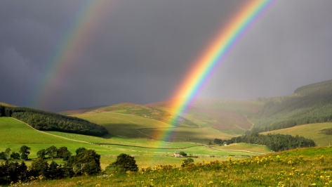 Rainbow_1574